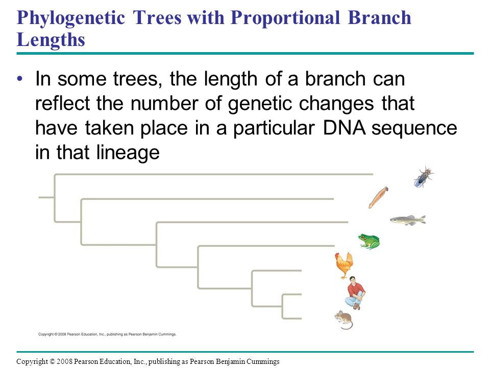Phylogenetic Trees with Proportional Branch Lengths