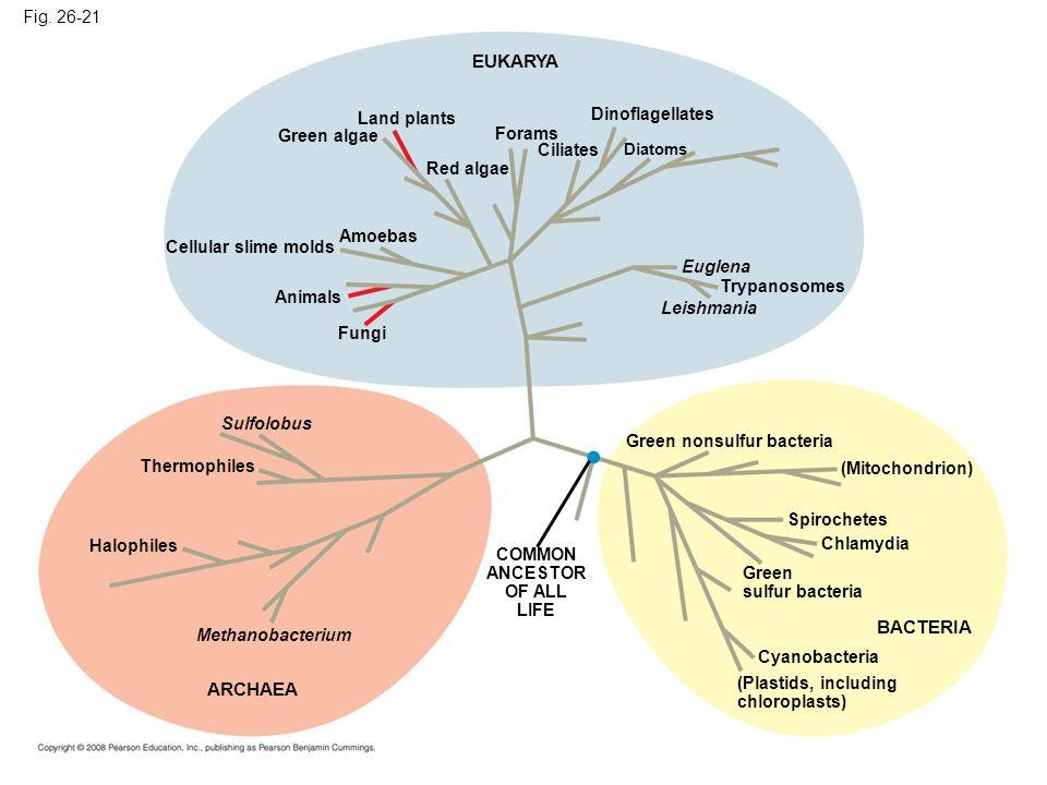 EUKARYA BACTERIA ARCHAEA Fig. 26-21 Land plants Dinoflagellates