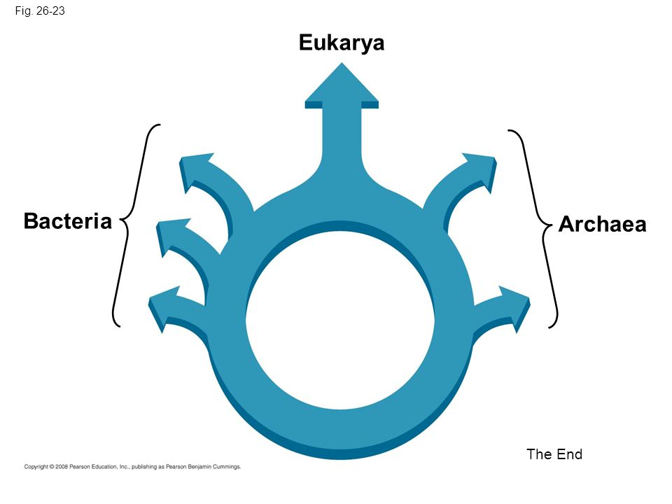 Eukarya Bacteria Archaea The End Fig. 26-23