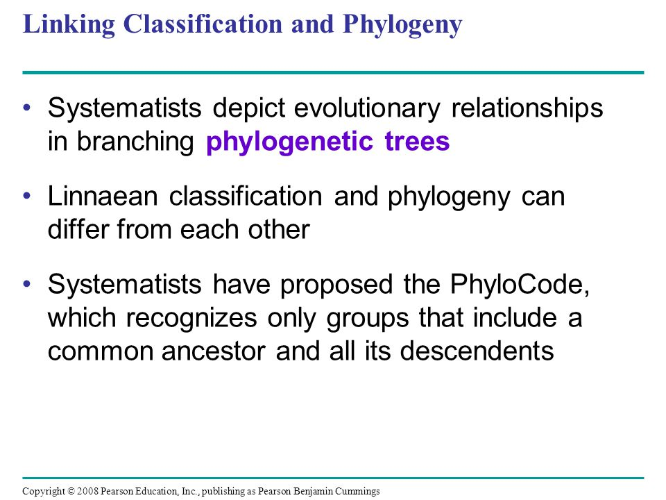 Linking Classification and Phylogeny