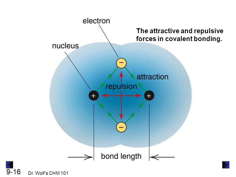 The attractive and repulsive forces in covalent bonding.