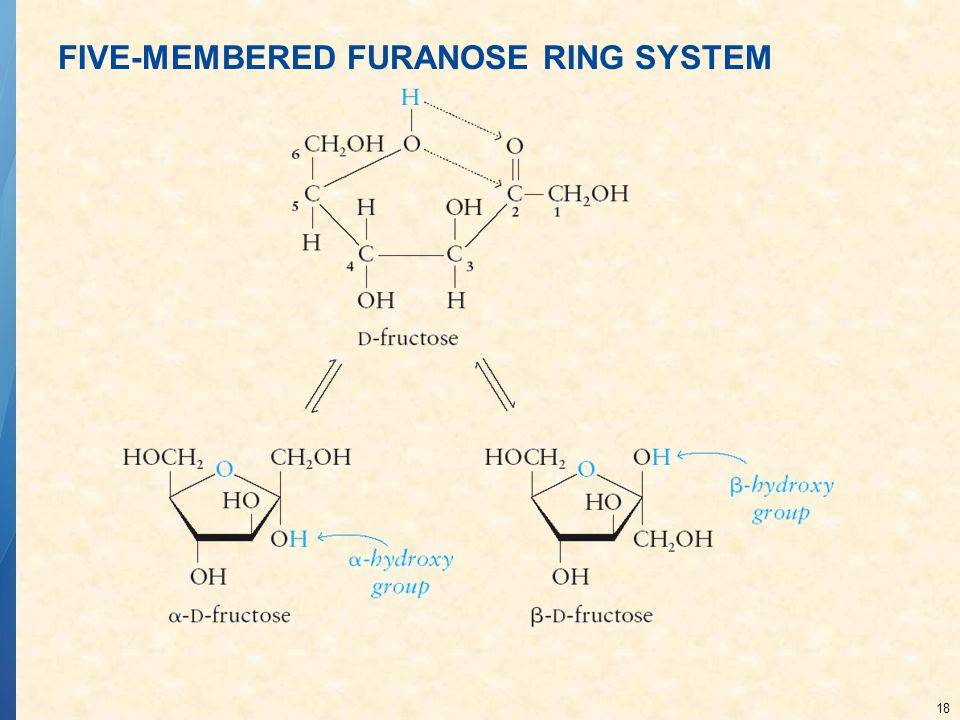 FIVE-MEMBERED FURANOSE RING SYSTEM