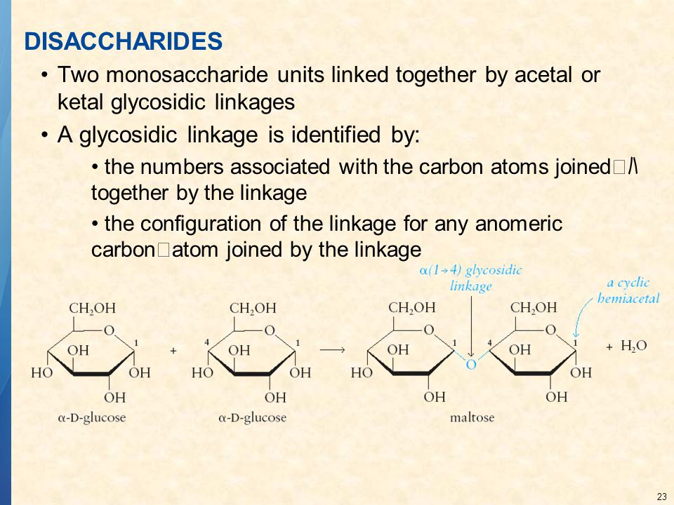 DISACCHARIDES A glycosidic linkage is identified by: