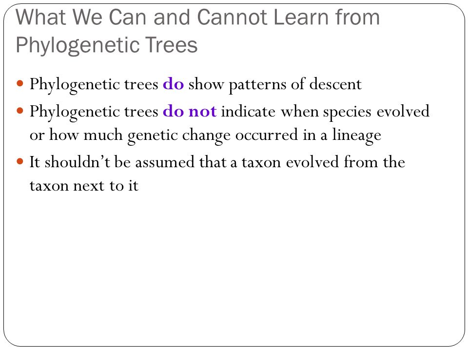 What We Can and Cannot Learn from Phylogenetic Trees