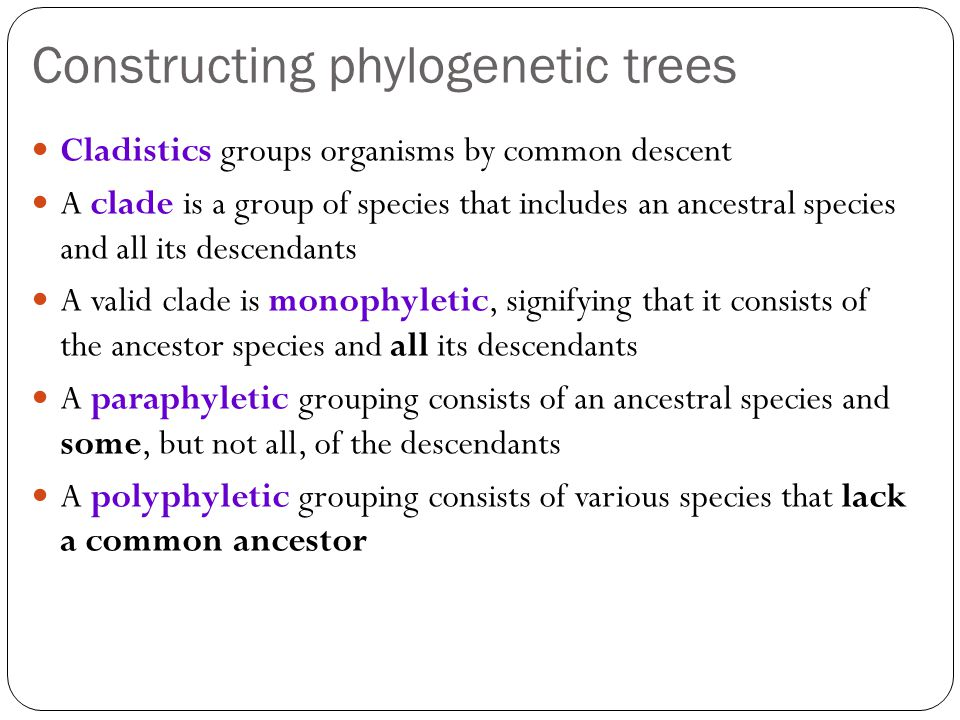 Constructing phylogenetic trees
