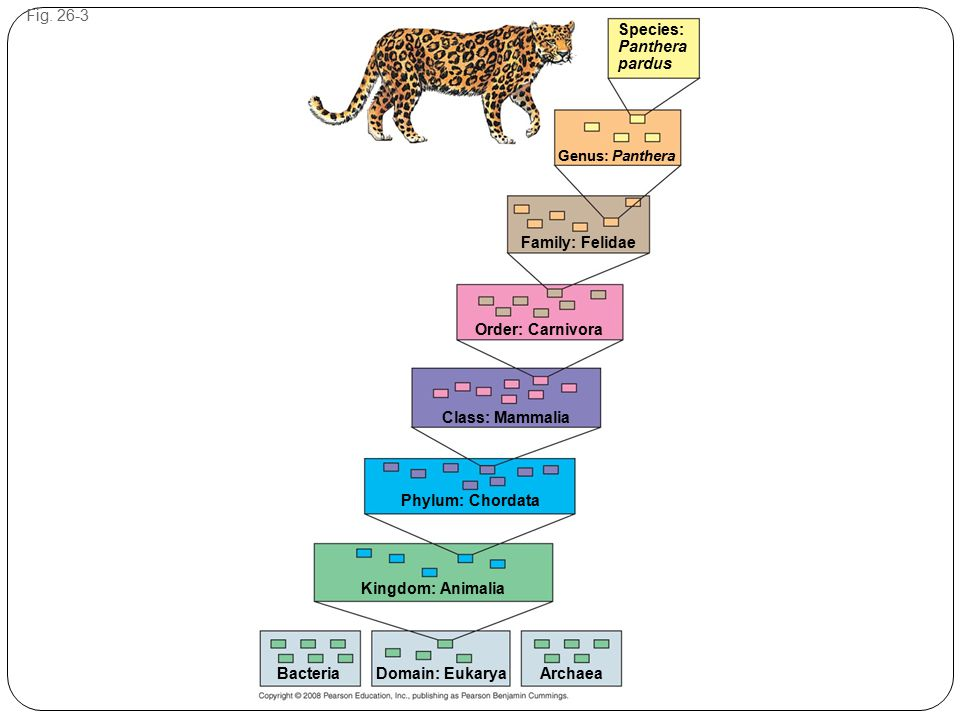 Figure 26.3 Hierarchical classification
