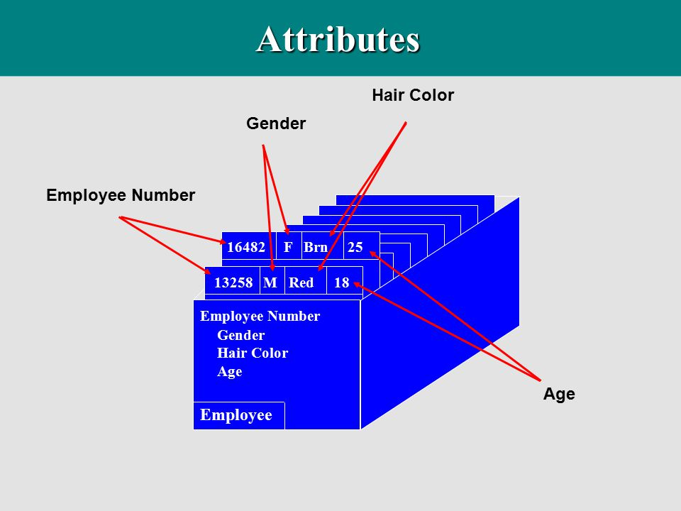 Attributes Hair Color Gender Employee Number Age Employee