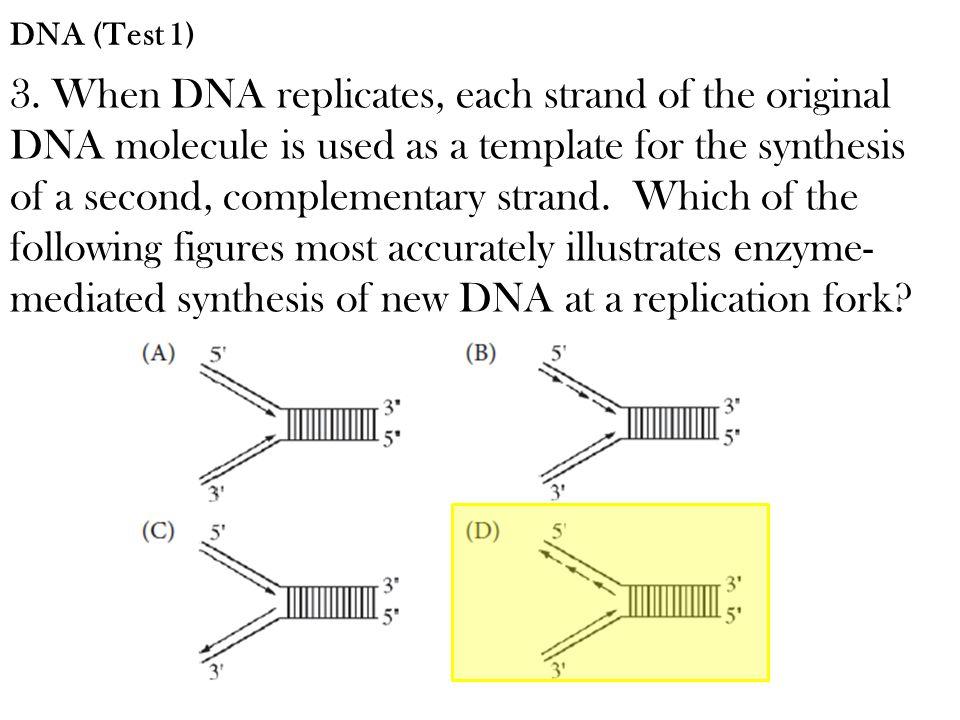 DNA (Test 1)