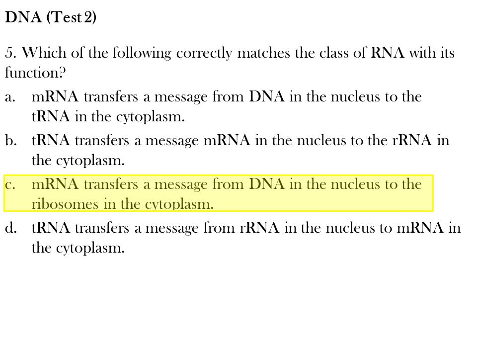 DNA (Test 2) 5. Which of the following correctly matches the class of RNA with its function