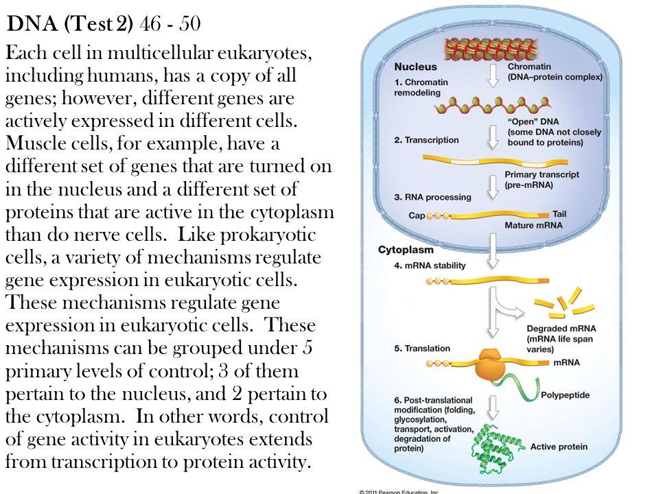 DNA (Test 2) 46 - 50