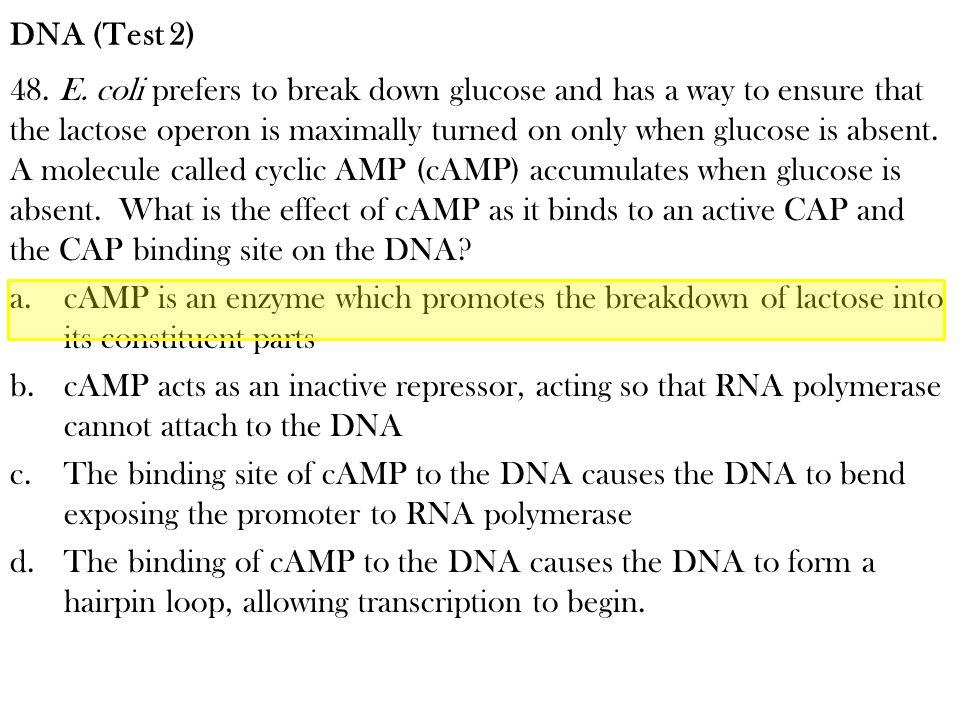 DNA (Test 2)