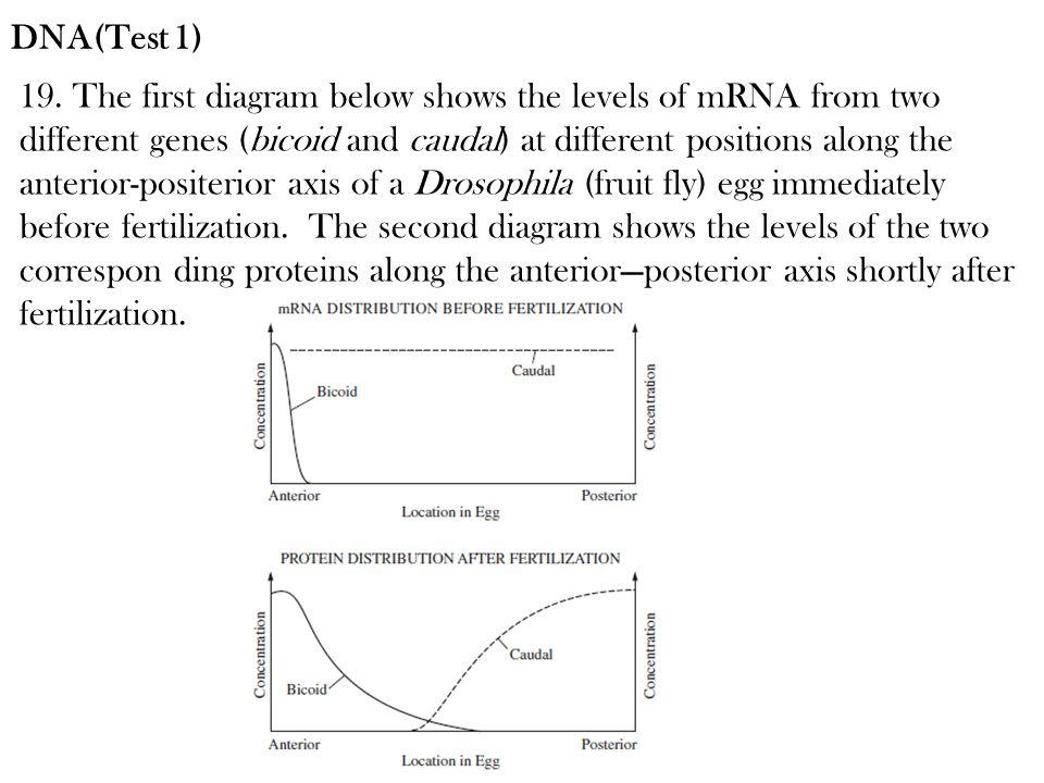 DNA(Test 1)