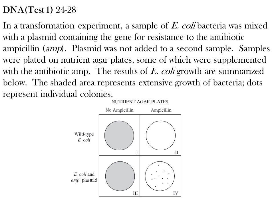 DNA(Test 1) 24-28