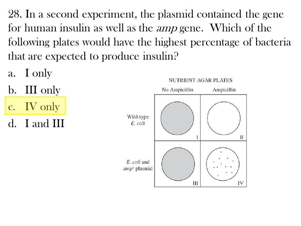 28. In a second experiment, the plasmid contained the gene for human insulin as well as the amp gene. Which of the following plates would have the highest percentage of bacteria that are expected to produce insulin