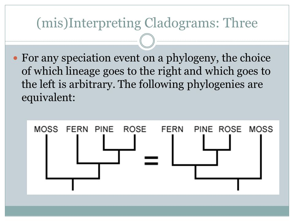 (mis)Interpreting Cladograms: Three