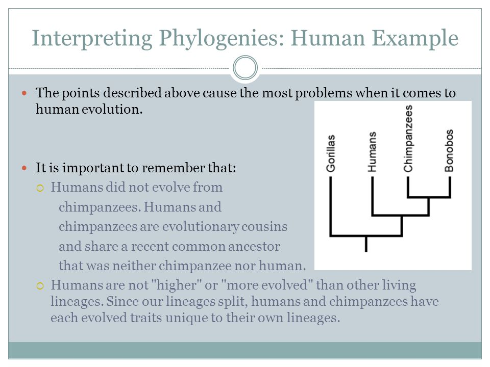 Interpreting Phylogenies: Human Example