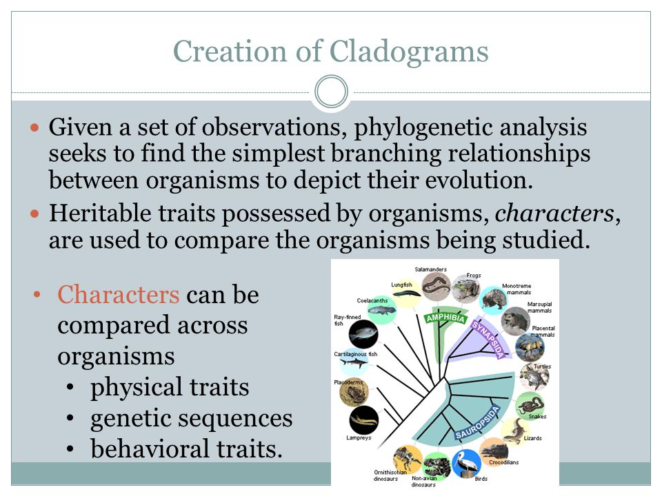 Creation of Cladograms