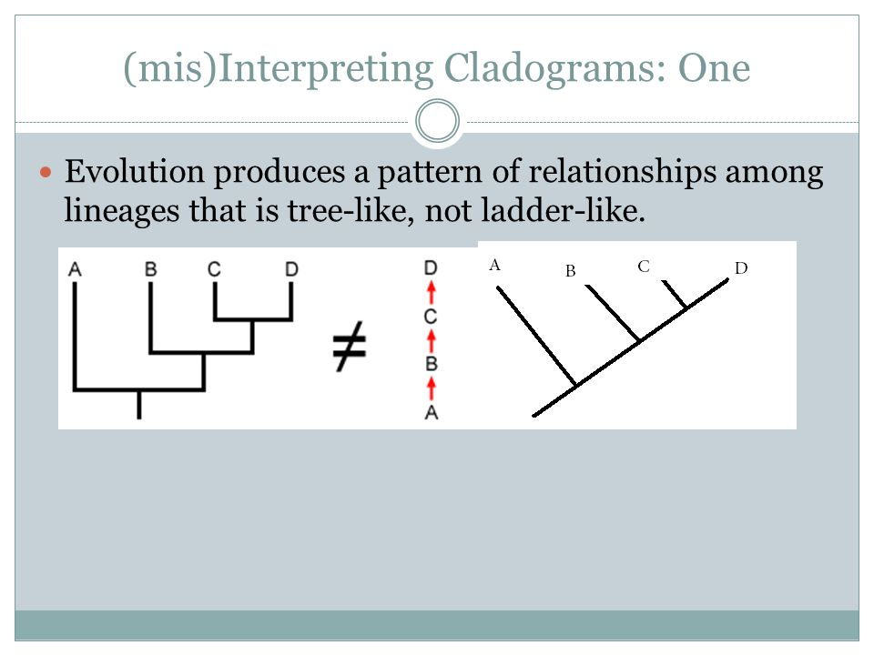 (mis)Interpreting Cladograms: One