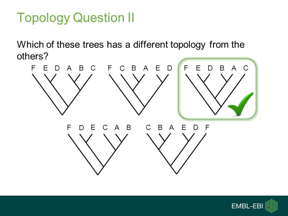 Topology Question II Which of these trees has a different topology from the others A. B. C. F.