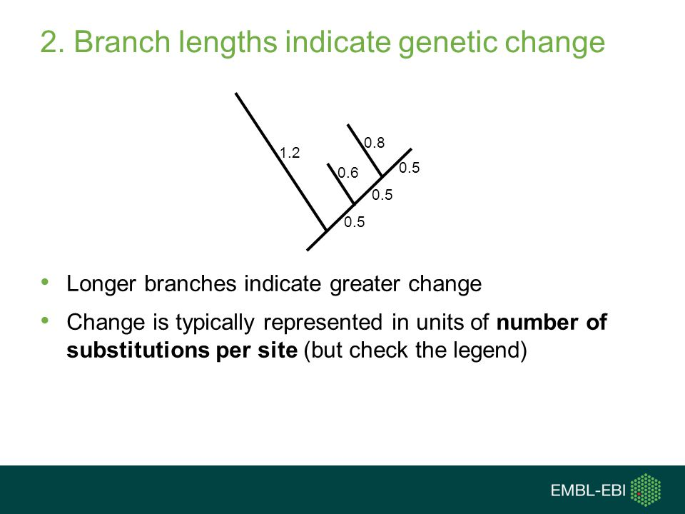 2. Branch lengths indicate genetic change