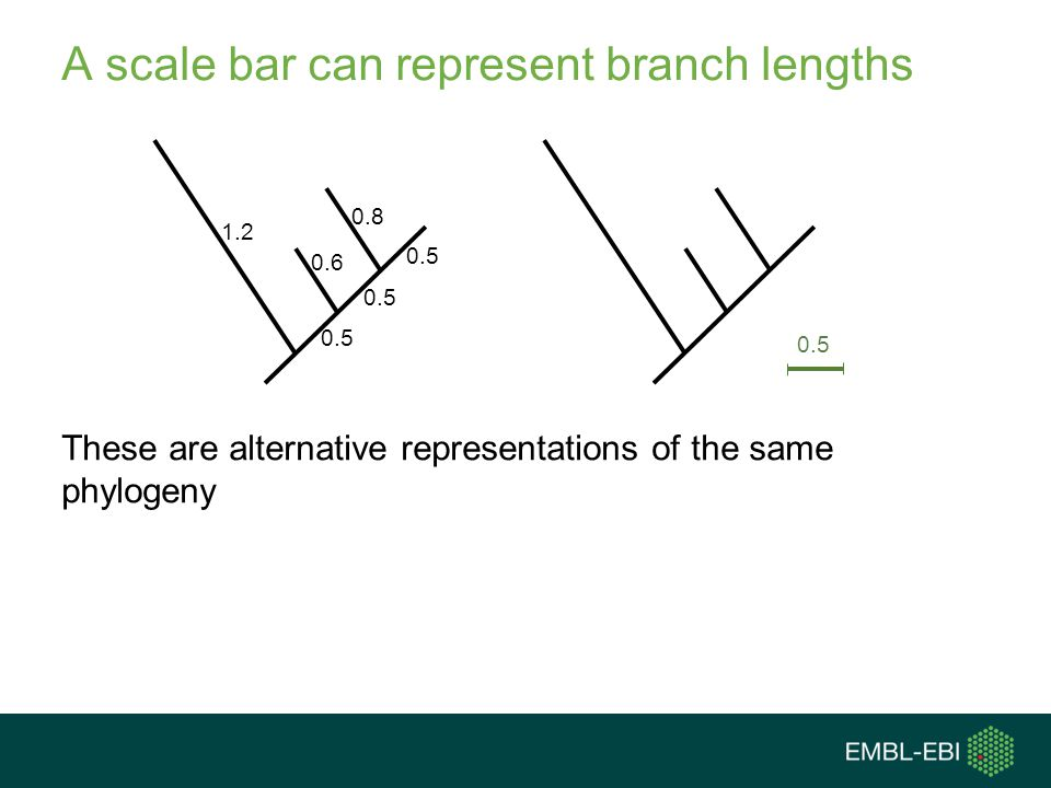 A scale bar can represent branch lengths
