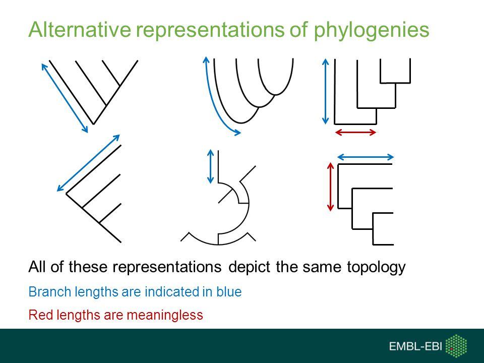 Alternative representations of phylogenies