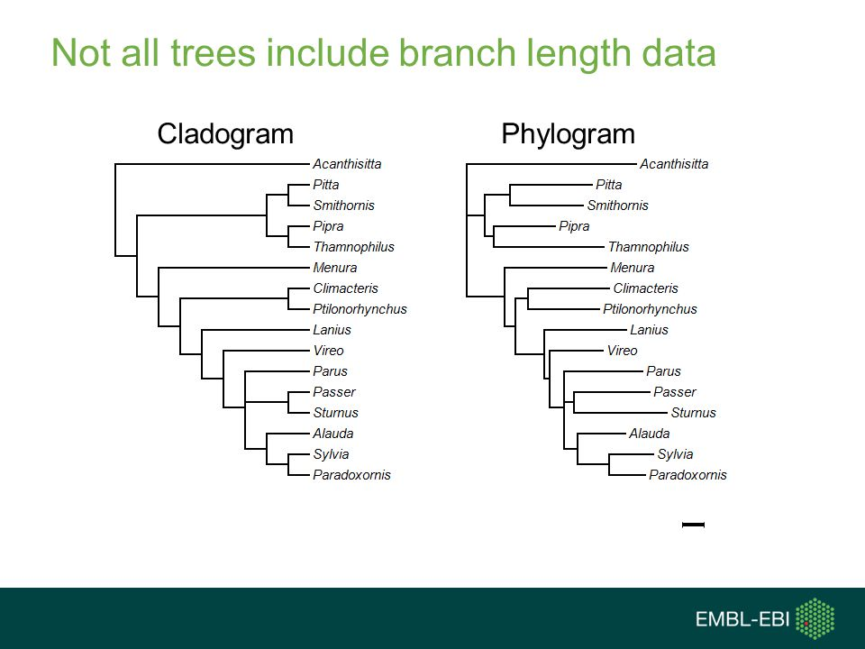 Not all trees include branch length data
