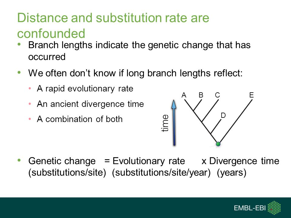 Distance and substitution rate are confounded