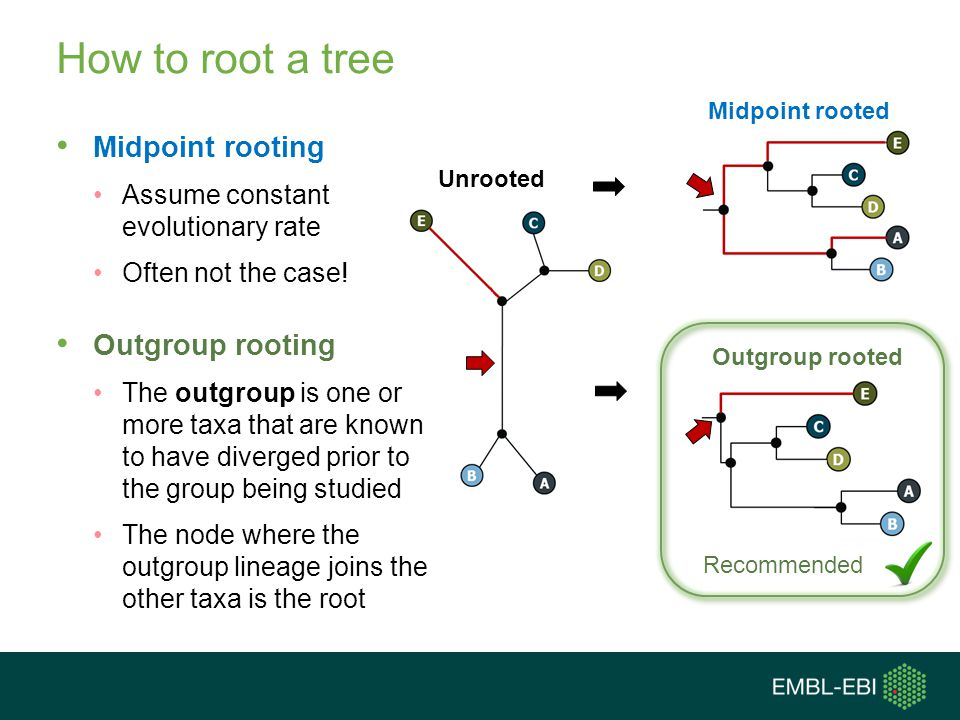 How to root a tree Midpoint rooting Outgroup rooting