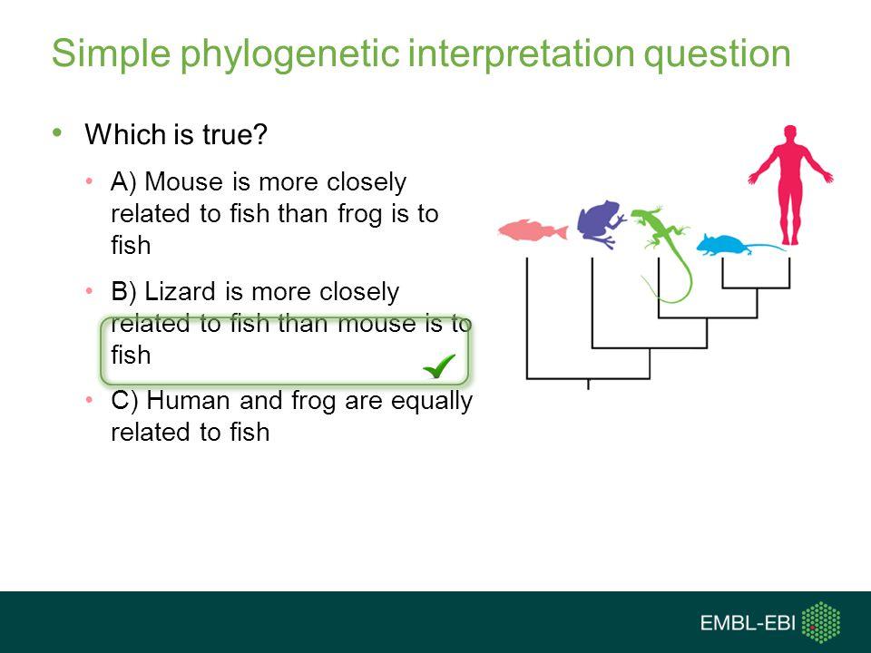 Simple phylogenetic interpretation question