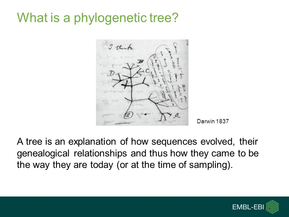 What is a phylogenetic tree