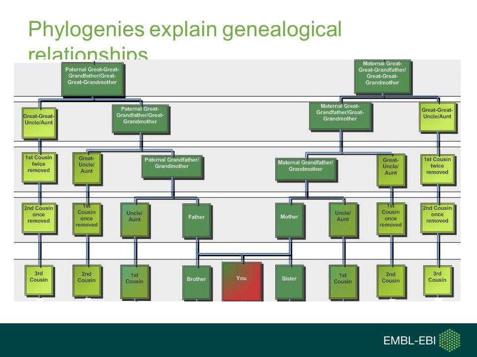 Phylogenies explain genealogical relationships