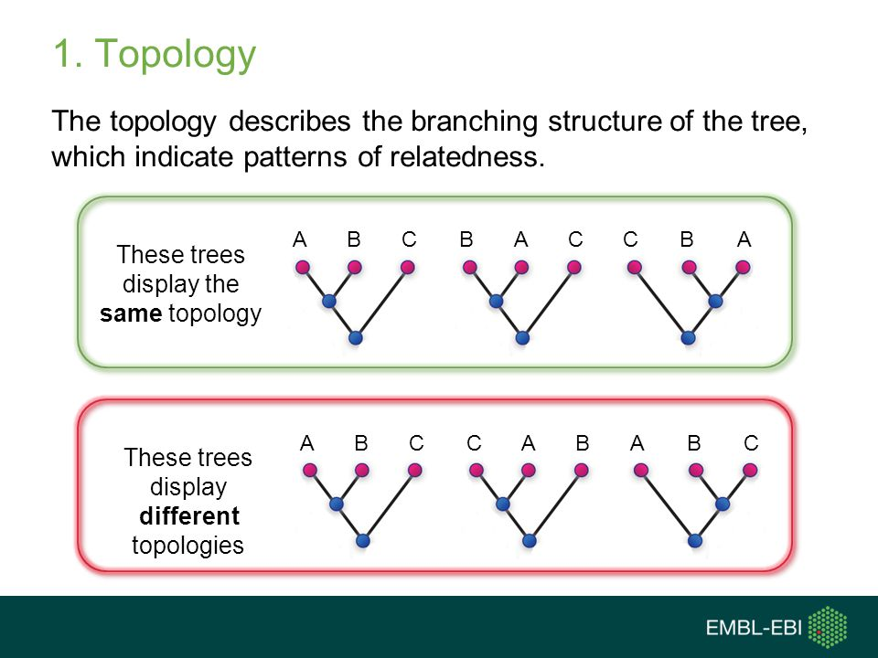 1. Topology The topology describes the branching structure of the tree, which indicate patterns of relatedness.