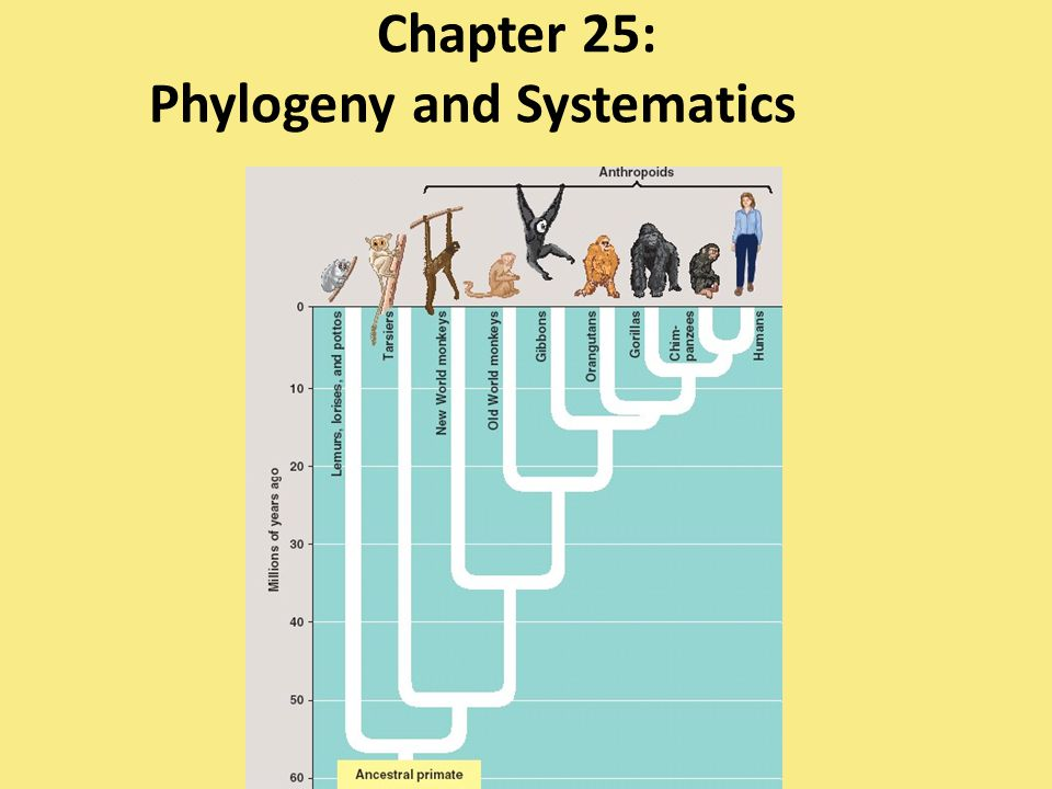 Chapter 25: Phylogeny and Systematics