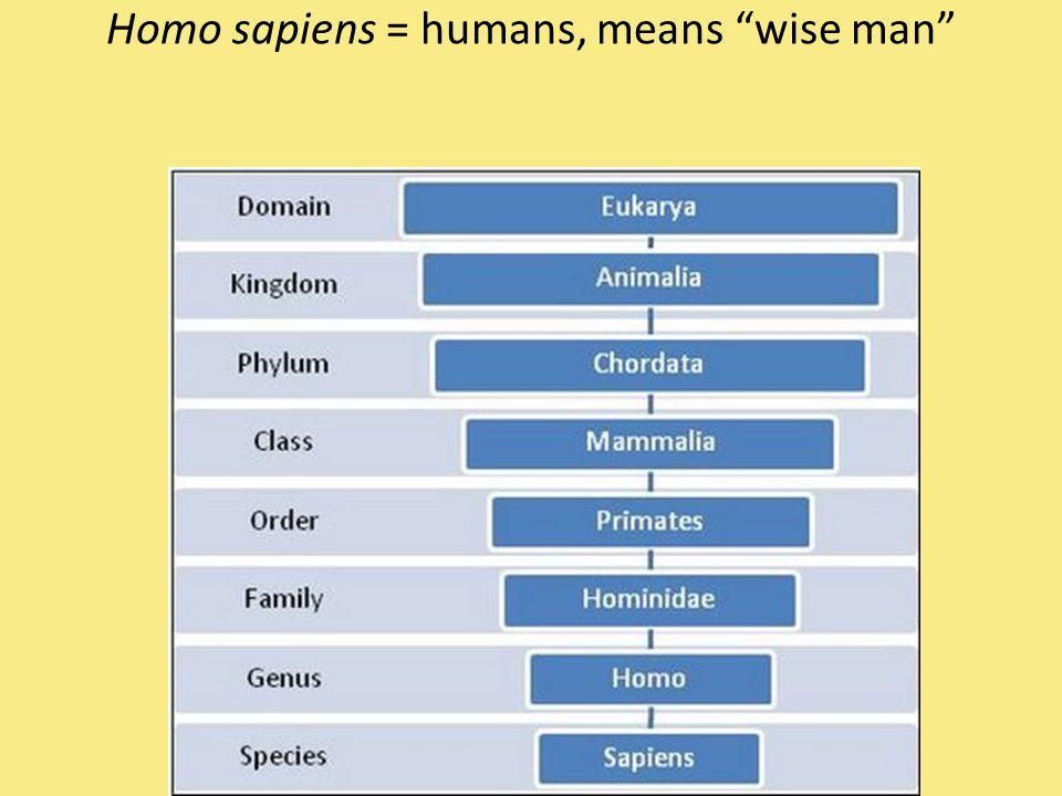 Homo sapiens = humans, means wise man