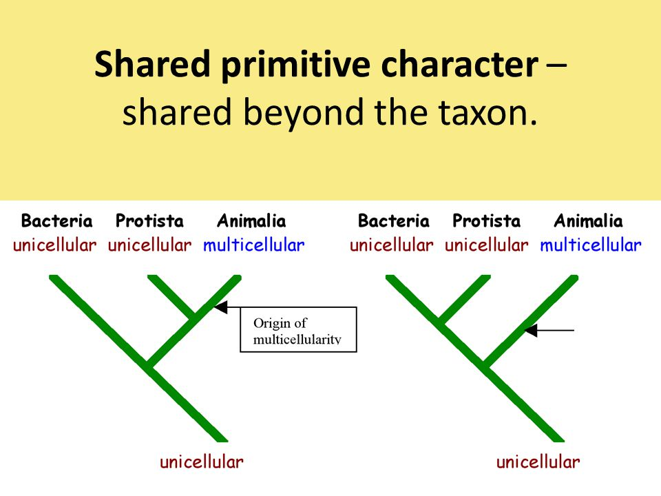 Shared primitive character – shared beyond the taxon.