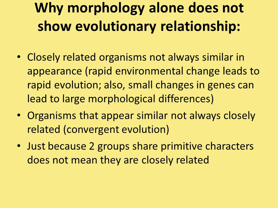 Why morphology alone does not show evolutionary relationship: