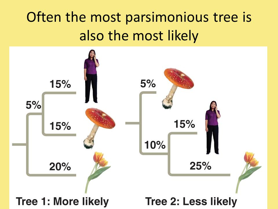 Often the most parsimonious tree is also the most likely