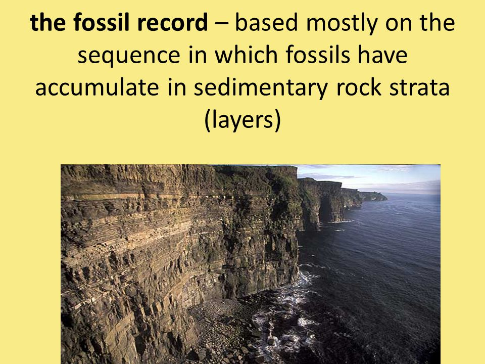the fossil record – based mostly on the sequence in which fossils have accumulate in sedimentary rock strata (layers)