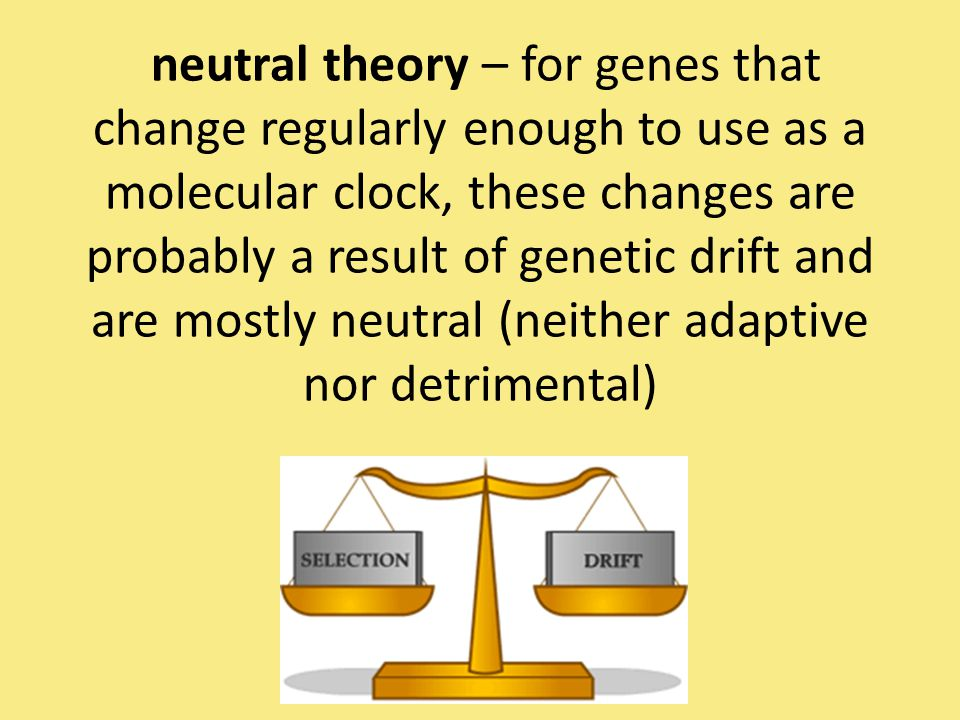 neutral theory – for genes that change regularly enough to use as a molecular clock, these changes are probably a result of genetic drift and are mostly neutral (neither adaptive nor detrimental)