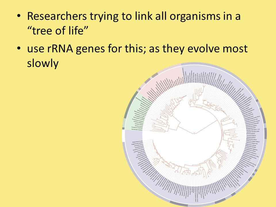 Researchers trying to link all organisms in a tree of life