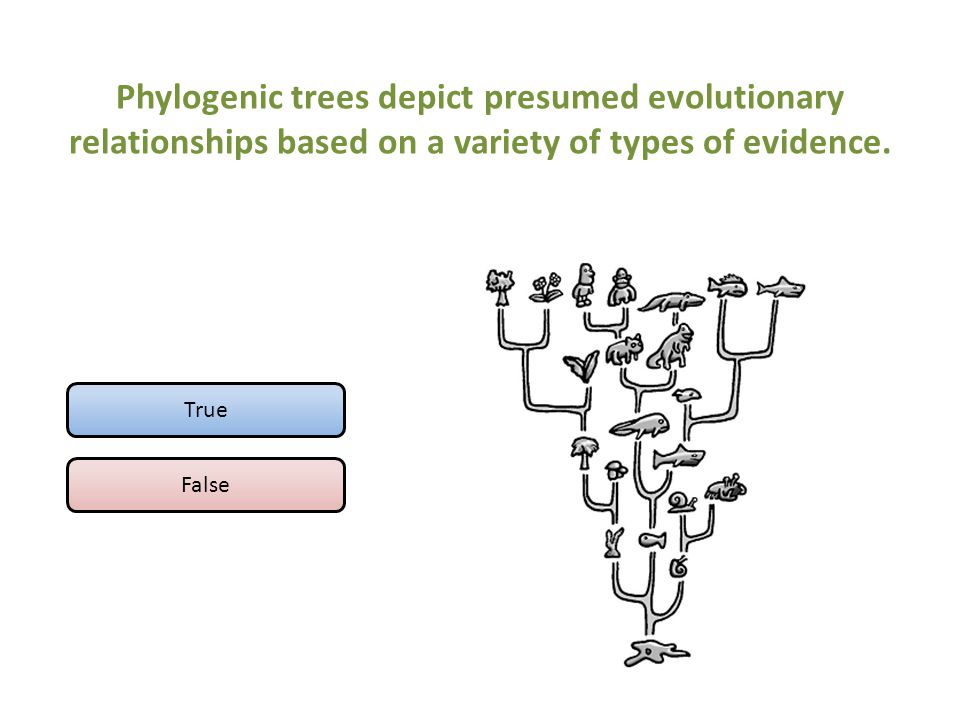 Phylogenic trees depict presumed evolutionary relationships based on a variety of types of evidence.