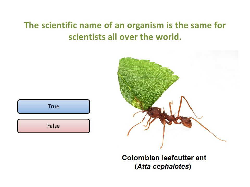 The scientific name of an organism is the same for scientists all over the world.
