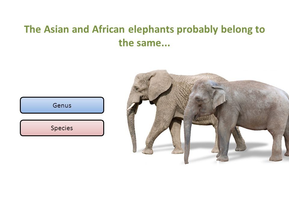 The Asian and African elephants probably belong to the same...