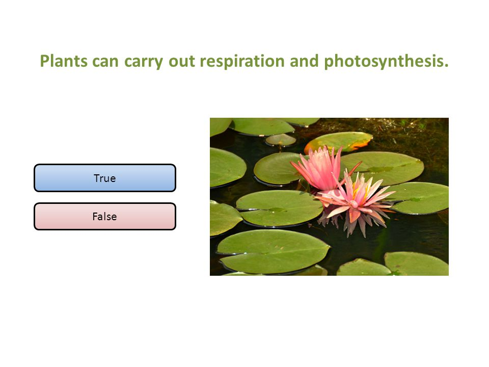 Plants can carry out respiration and photosynthesis.