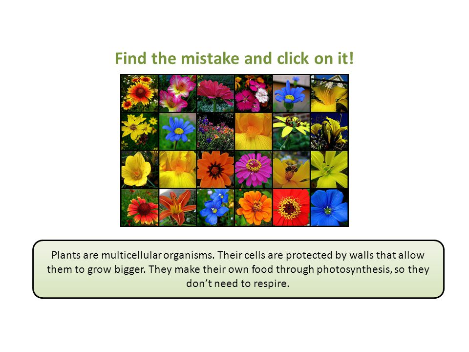 Find the mistake and click on it!