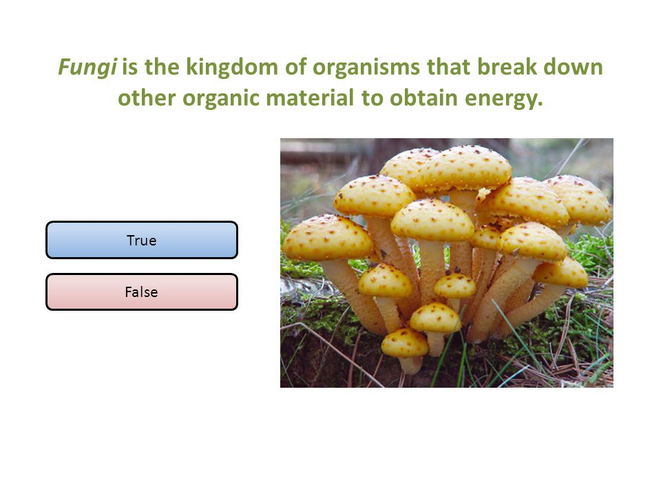 Fungi is the kingdom of organisms that break down other organic material to obtain energy.