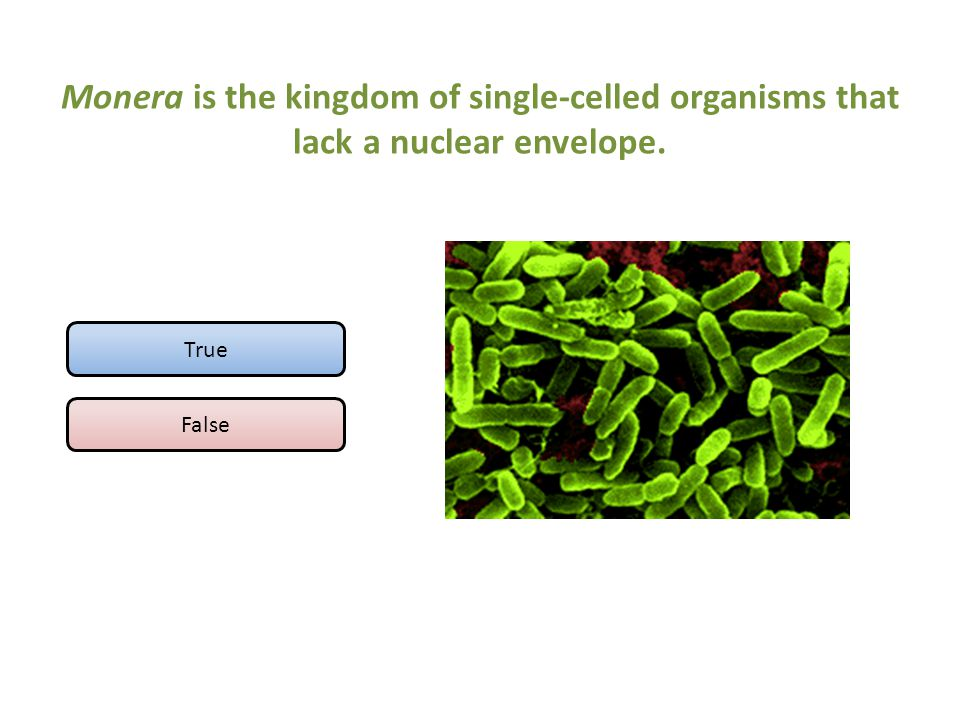 Monera is the kingdom of single-celled organisms that lack a nuclear envelope.