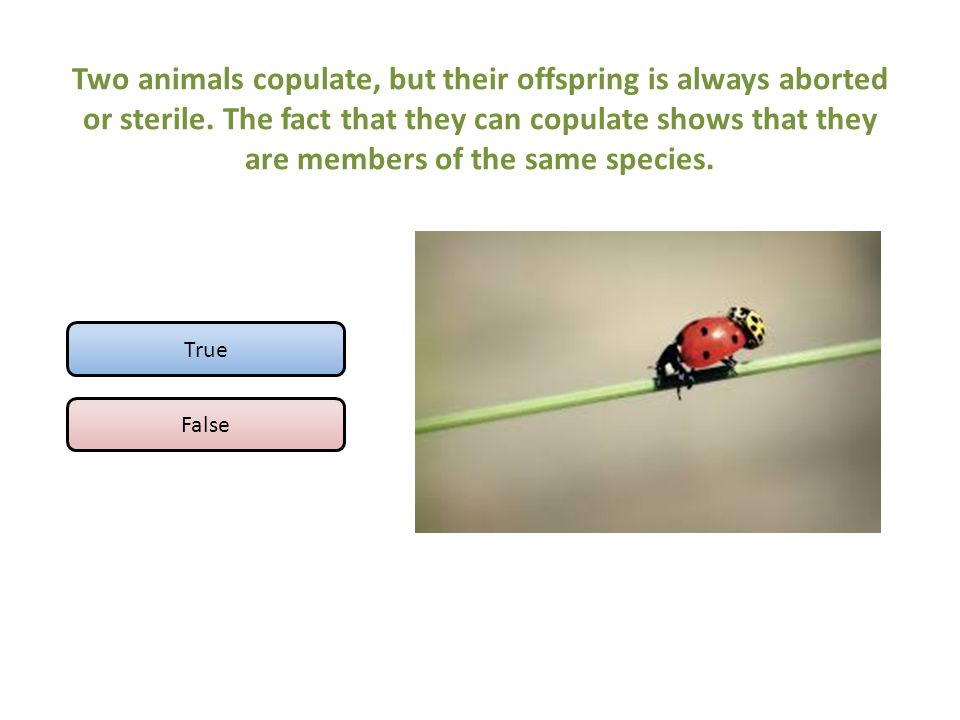 Two animals copulate, but their offspring is always aborted or sterile