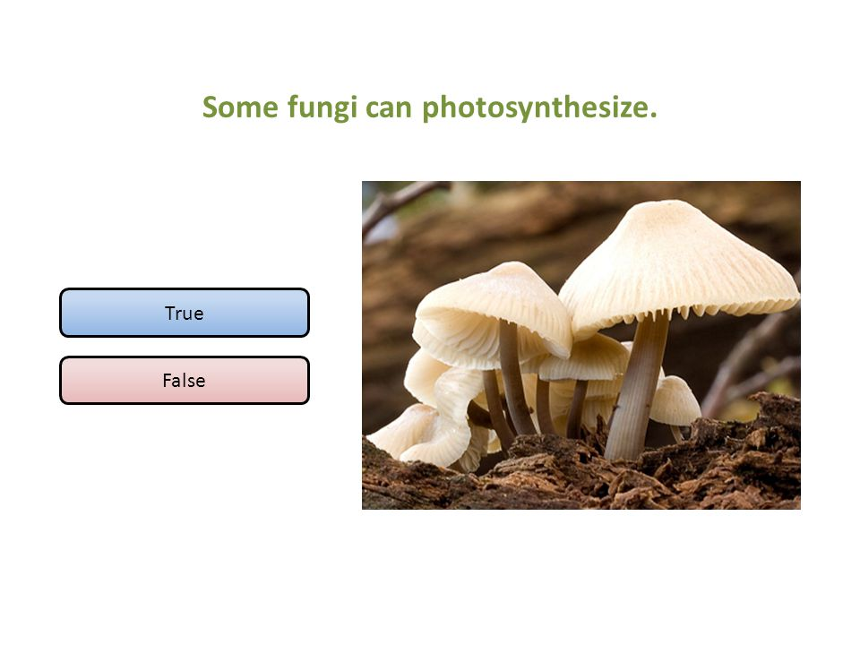 Some fungi can photosynthesize.